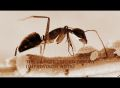 the latest unified theory(improvising ants)